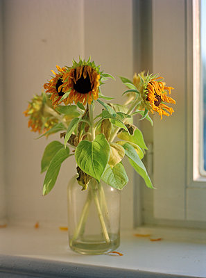 Sonnenblumen_1 - p1145m1153189 von Kerstin Lakeberg