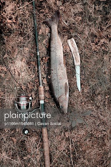 Overhead view of fishing rod by fish and knife on field - p1166m1545681 by Cavan Social