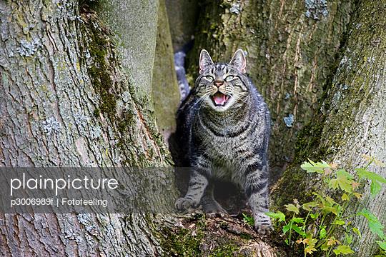 Cat on tree trunk baring its teeth