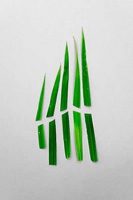Cut grass - p1228m1425451 by Benjamin Harte
