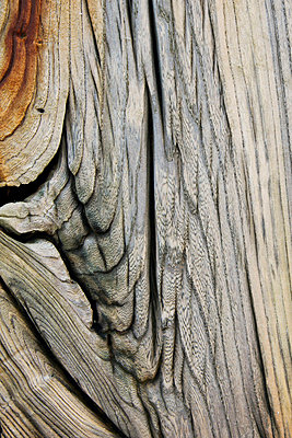 Corroded Wood - p6692510 by Peter Kelly