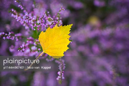 p1144m967401 von Nico van  Kappel