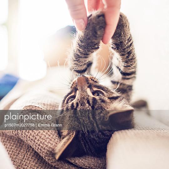 Kittens - p1507m2027758 by Emma Grann