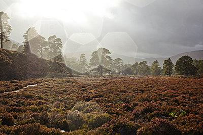 Wald im Cairngorm Nationalpark, Schottland - p1145m1558735 von Kerstin Lakeberg