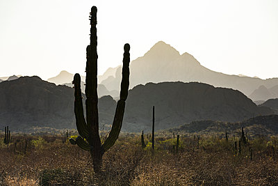 Scenery with Sierra de la Giganta mountains and cacti, Loreto, Baja California Sur, Mexico - p343m1520842 by Andrew Peacock
