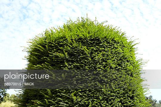 Busch - p8970015 von MICK