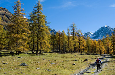 Man hiking in South Tyrol - p1354m2292917 by Kaiser