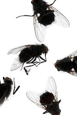 Tote Fliegen - p4010608 von Frank Baquet