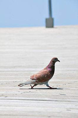 Dove - p4320610 by mia takahara