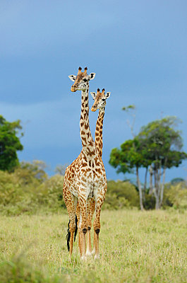 Serengeti - p533m899157 by Böhm Monika