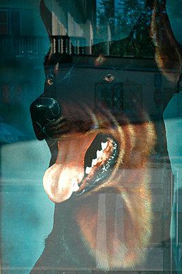 Dog - p9790704 by Servas