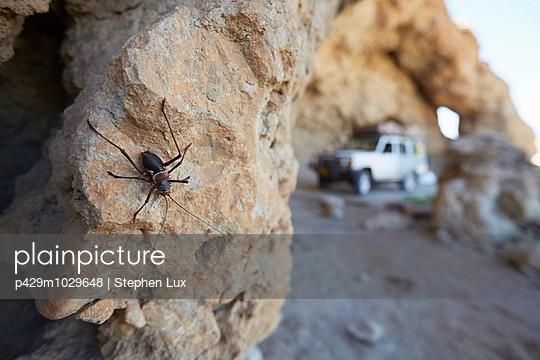 Insect on rock, Namib-Naukluft National Park, Namibia