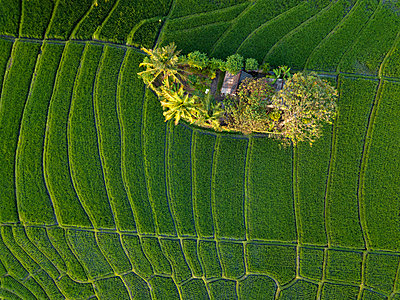 Indonesia, Bali, Aerial view of rice fields - p300m2042491 by Konstantin Trubavin