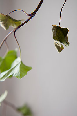 Dead leaves - p951m2179030 by Caterina Sansone