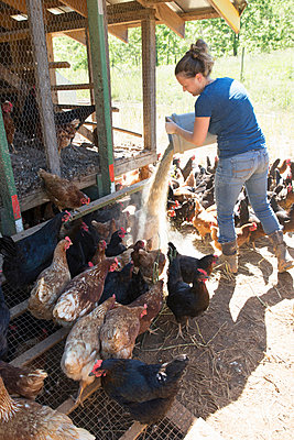 Woman feeding free range golden comet and black star hens on organic farm - p924m1513585 by Melissa Goodwin