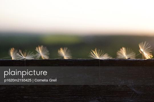 p1620m2193425 by Cornelia Greil