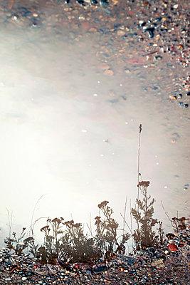 Reflexion in einer Pfütze - p382m1540195 von Anna Matzen