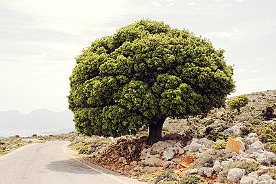 Baum - p751m1584764 von Dieter Schwer