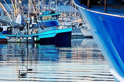 Ducks swimming in urban harbor,Anacortes, Washington, USA - p1100m2084236 by Mint Images