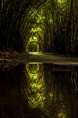 Pathway through bamboo forest - p343m1090189 by Tim Martin