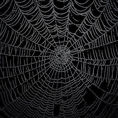 Spiderweb - p896m959381 by Sander Nieuwenhuys