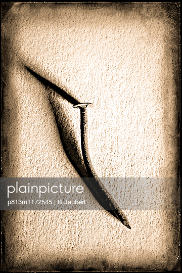 Rusty steel nail.  - p813m1172545 by B.Jaubert