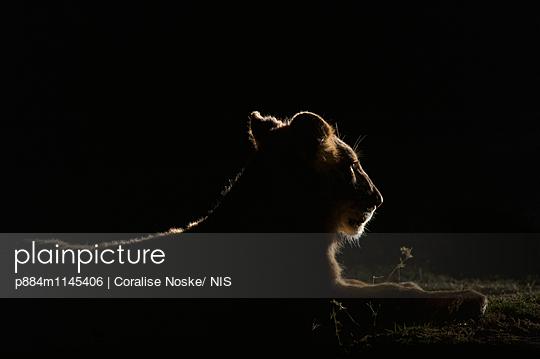 p884m1145406 von Coralise Noske/ NIS