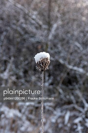 Winterstarre - p949m1200286 von Frauke Schumann