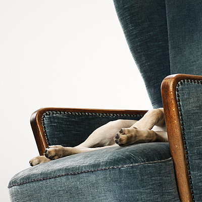 Puppy on an armchair - p4030988 by Helge Sauber