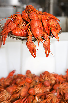 Boiled Crayfish Being Served - p816m913275 by Inger Marie Grini