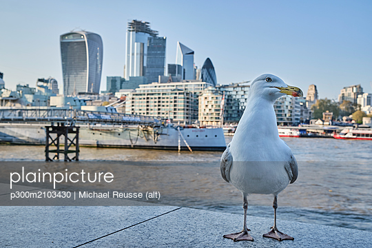 UK, London, seagull in front of River Thames and skyline - p300m2103430 by Michael Reusse (alt)