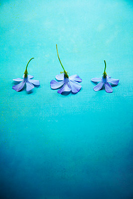 Three Little Lilac Flowers Turned Over - p1248m2109272 by miguel sobreira