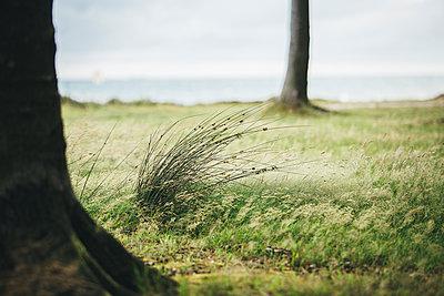Germany, Nienhagen, grass at Gespensterwald - p300m2219159 by Anke Scheibe