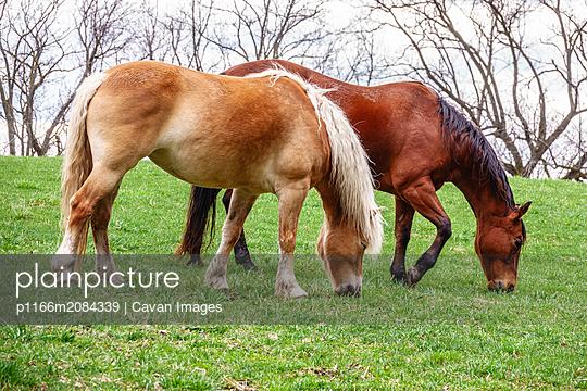 p1166m2084339 von Cavan Images