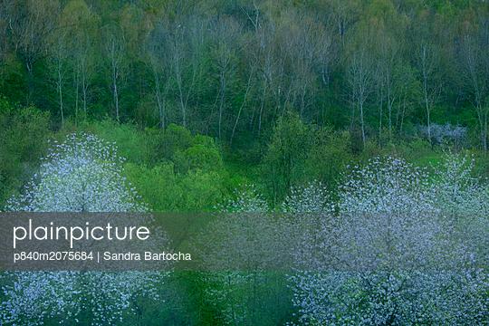 p840m2075684 von Sandra Bartocha