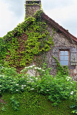Overgrown - p756m932155 by Bénédicte Lassalle