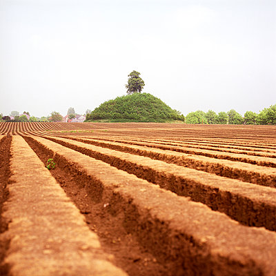 Field with furrows - p1231m1055644 by Iris Loonen