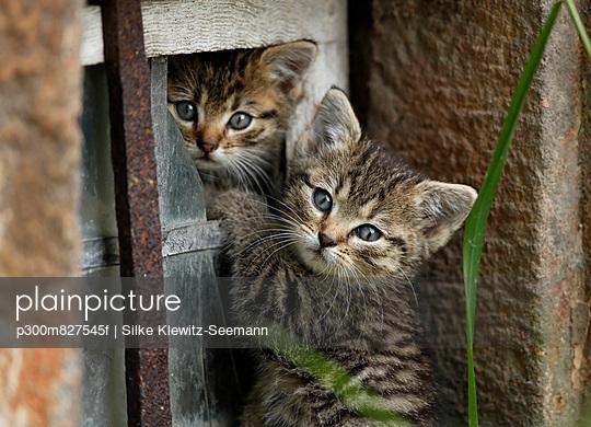 Kittens playing in broken window