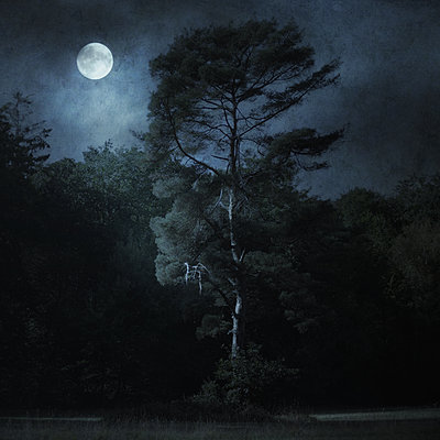 Moonstruck - p1633m2289751 by Bernd Webler