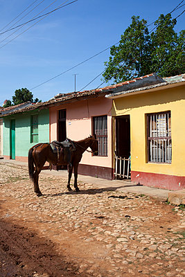 Saddle horse in front of house - p304m1093924 by R. Wolf
