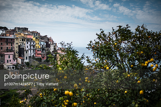 View of Corniglia village with lemon tree - p1007m1424577 by Tilby Vattard