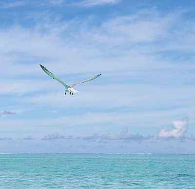 Seagull in flight - p045m696788 by Jasmin Sander