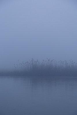 Reed in the mist - p1682m2260716 by Régine Heintz