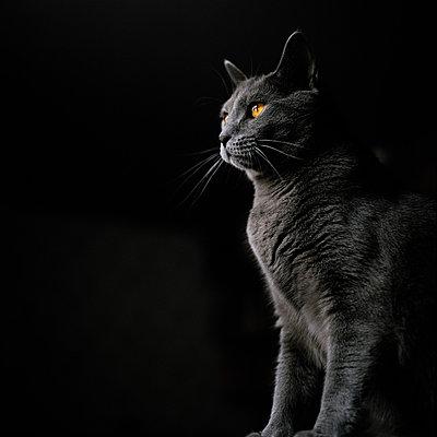 Katzenportrait - p1097m882006 von Mélanie Bahuon