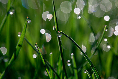 High angle view of water drops on grasses during sunny day - p1166m2112074 by Cavan Images