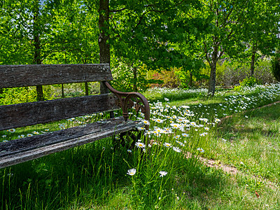 Bench among green grass and wild flowers - p1427m1553664 by WalkerPod Images