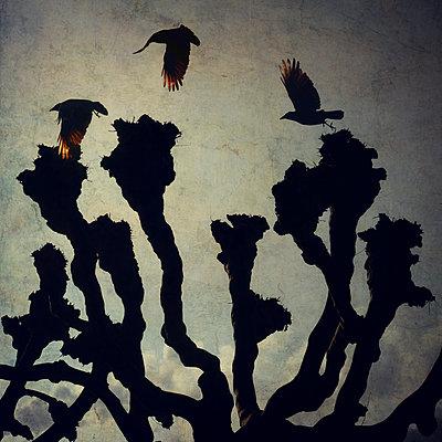 Three Crows - p1633m2220232 von Bernd Webler