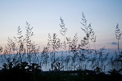 Grasses - p310m890494 by Astrid Doerenbruch