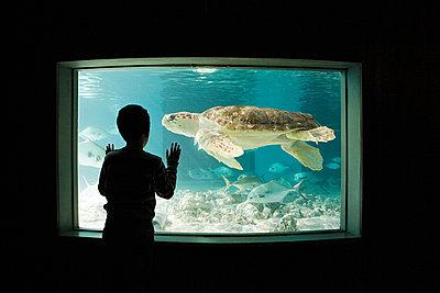 Boy watching sea turtle in aquarium - p9243224f by Image Source