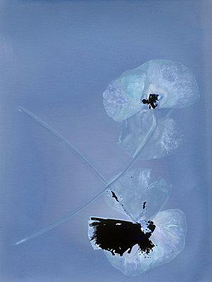 Pressed flowers - p945m2177748 by aurelia frey